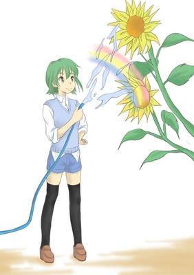 向日葵.jpg
